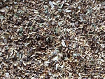 Chicory Seed Extract 10:1 TLC