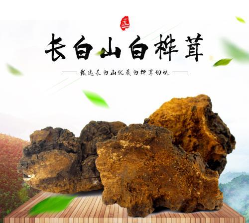 Chaga Mushroom Extract Polysaccharide 50% UV