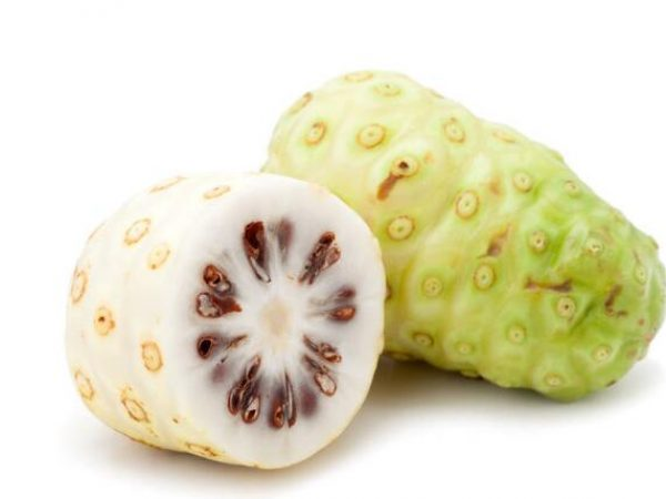 Noni Fruit Extract 10:1 TLC