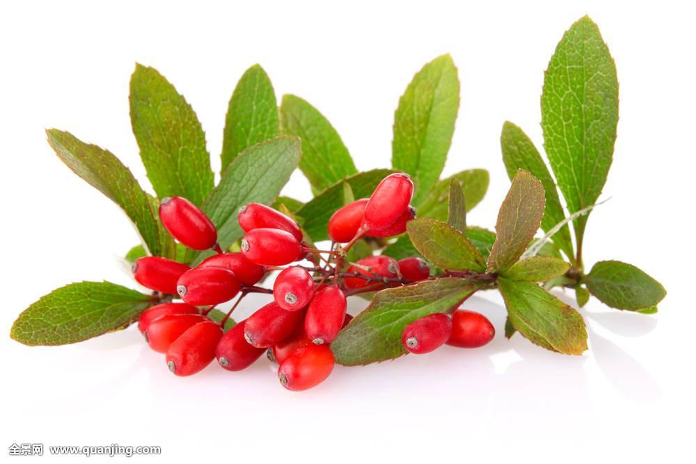 Barberry Extract 4:1 TLC