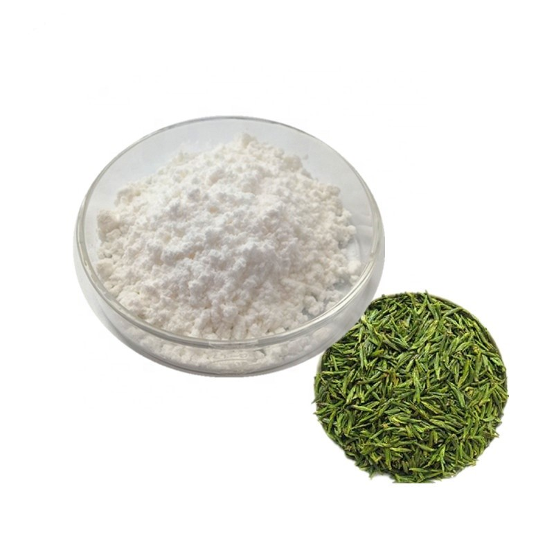 Green Tea Extract Epicatechin 90% HPLC