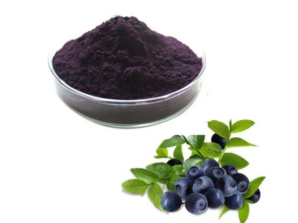 European Bilberry Extract Anthocyanidins 25% UV (36% Anthocyanosides HPLC)
