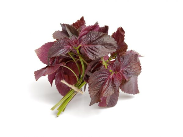 Perilla Leaf Extract 4:1 TLC