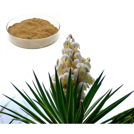 Yucca Extract 10:1 TLC