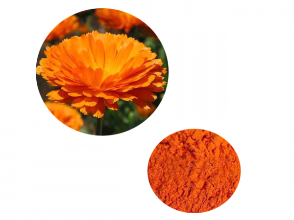 Marigold Flower Extract Lutein 5% HPLC