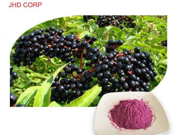 Elderberry Fruit Extract 4:1 TLC