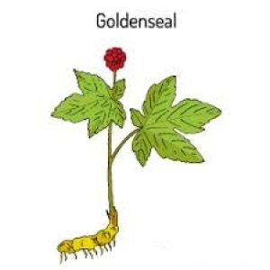 Goldenseal Root Extract Berberine 5% HPLC