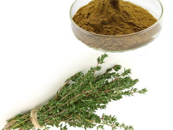 Thyme Extract 4:1 TLC (Canada Warehouse)