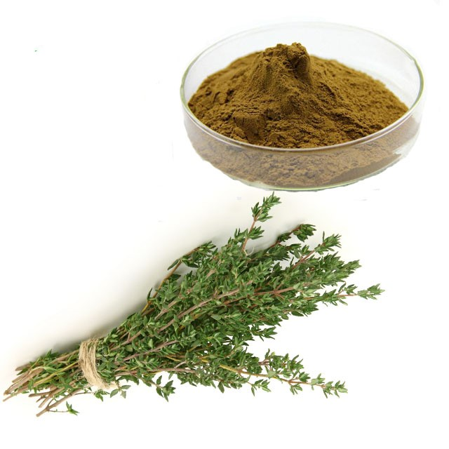 Thyme Extract 4:1 TLC