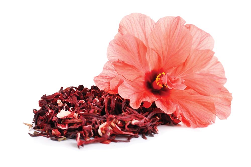 Hibiscus Extract 10:1 TLC