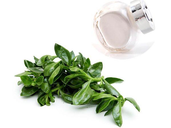 Andrographis Paniculata Extract 98% Andrographolide HPLC