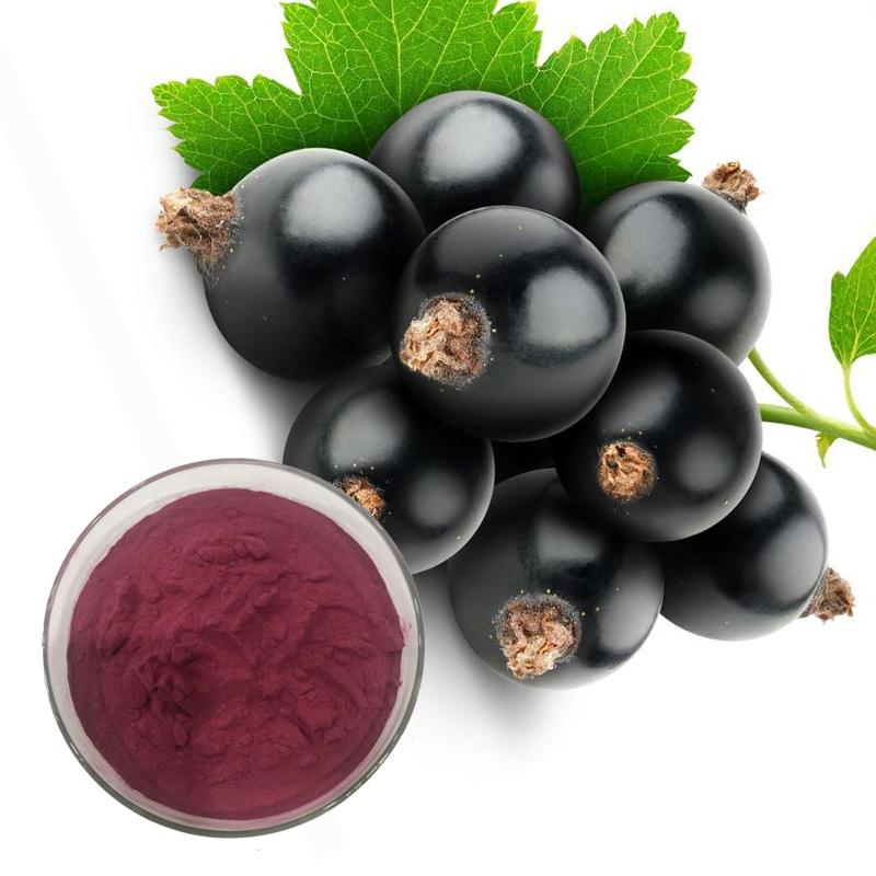 Black Currant Fruit Extract 10% polyphenols  UV
