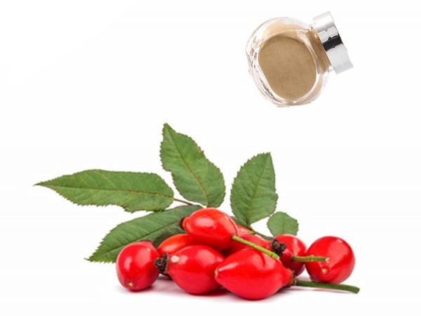 Rose Hips Extract 10:1 TLC