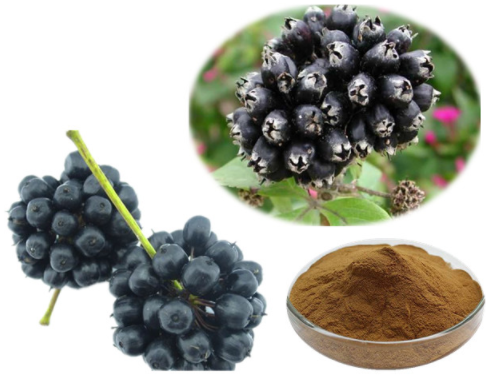 Eleuthero Extract 10:1 TLC (Siberian Ginseng Extract 10:1 TLC)