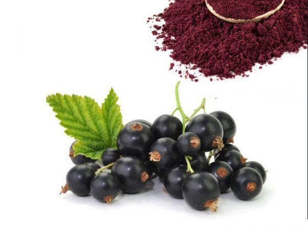 Blackberry Extract 4:1 TLC