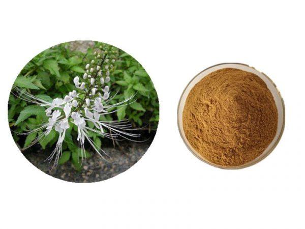 Java Tea Powder (Orthosiphon Spicatus Powder)